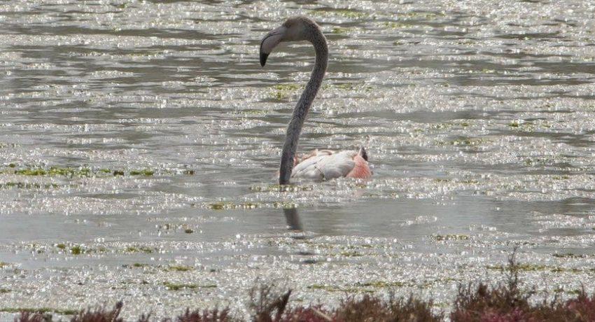 papa_flamingos3