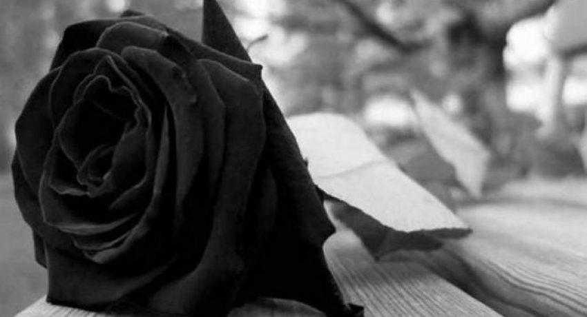rose_penthos-1