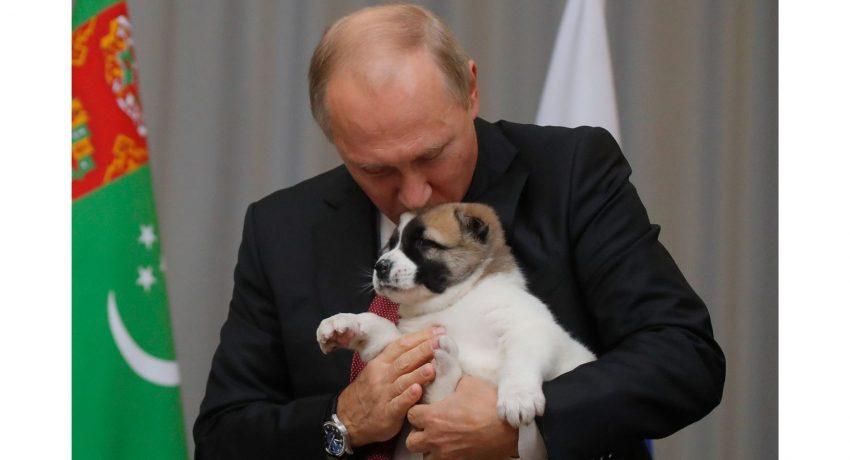 171011133334-02-putin-puppy