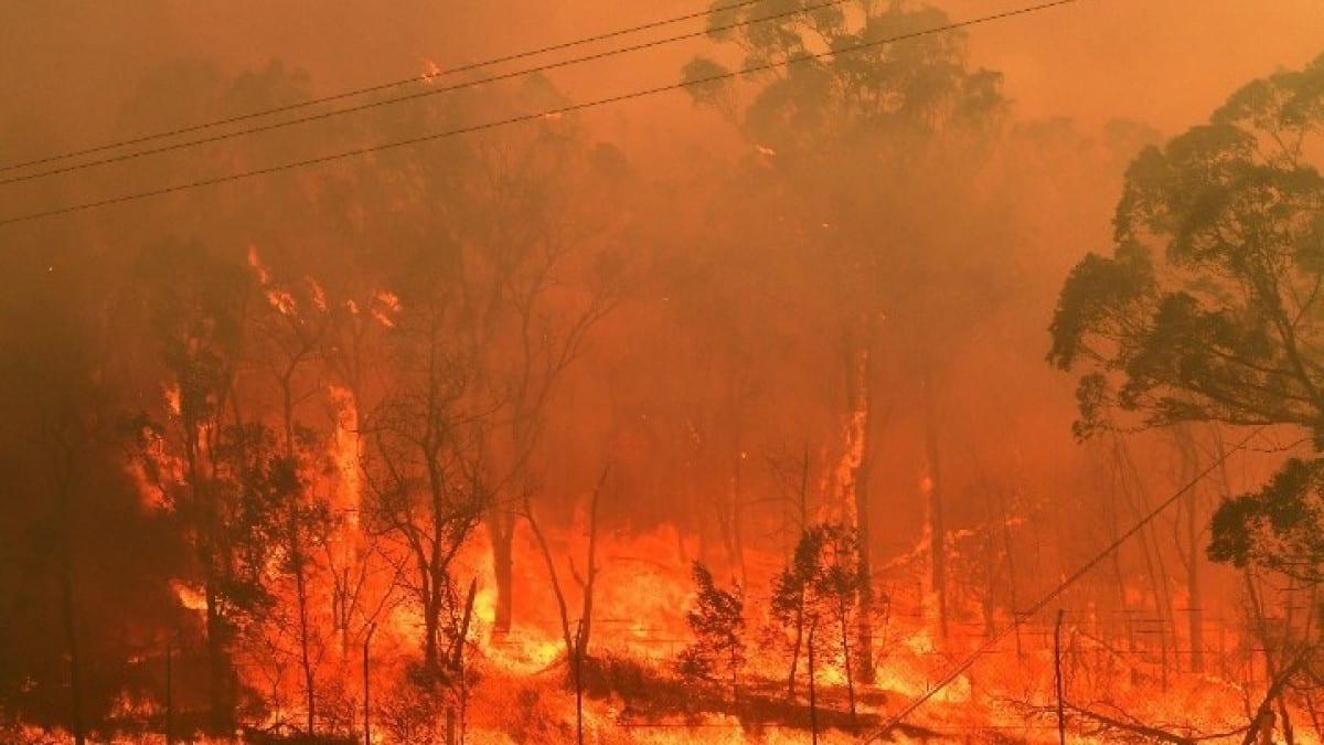 ape-wildfires