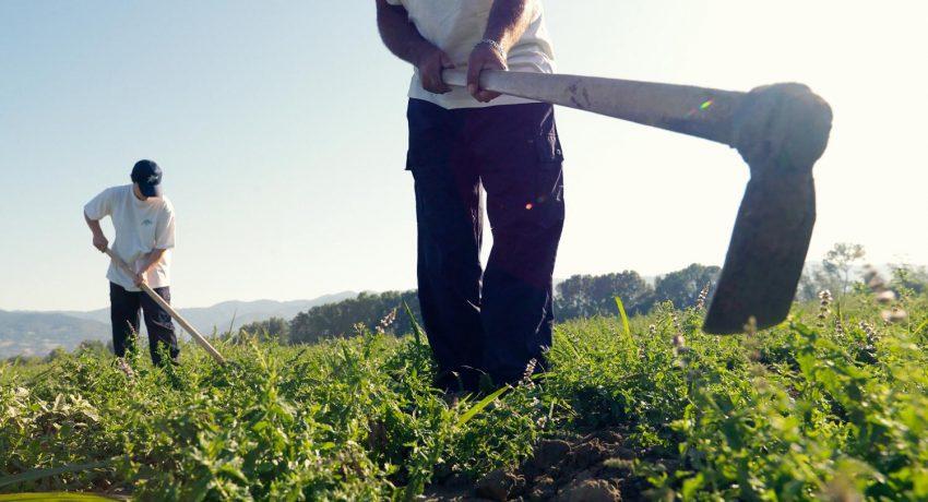 area_agricoltura