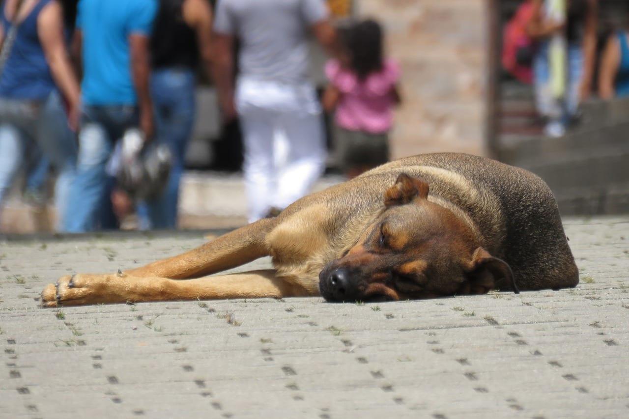 dog-2399764_1280