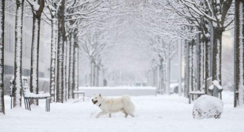 A dog walks through freshly fallen snow, as the spread of the coronavirus disease (COVID-19) continues, in Zurich, Switzerland January 27, 2021. REUTERS/Arnd Wiegmann