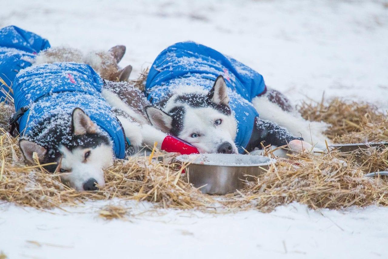 210216202600_dog-cold-15-1280x854
