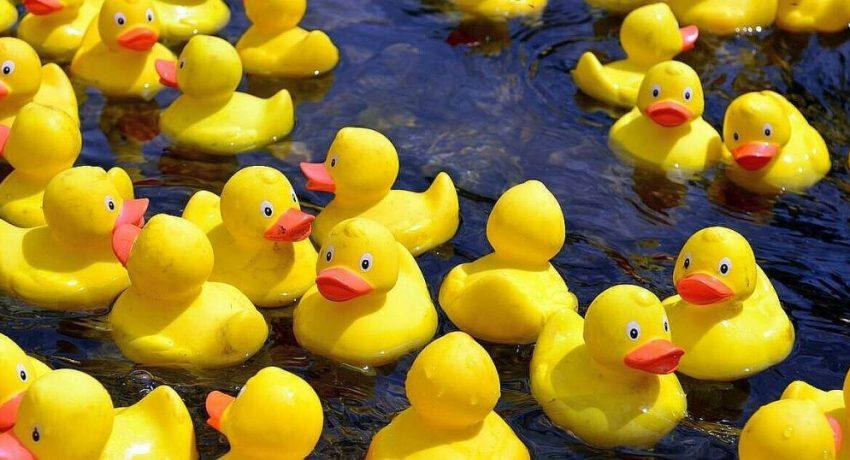 7b050de4d5548f4642781e82cf463a2f-les-canards-de-bain-en-plastique-sont-de-veritables-nids-bacteries-1024x538