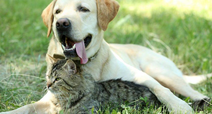 210423124117_dogandcat-15-1280x854