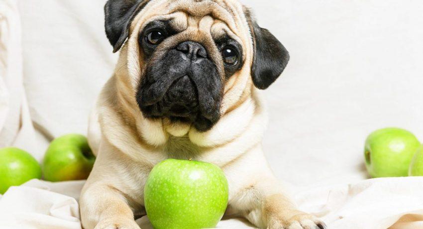 210510120502_dog-15-1280x854