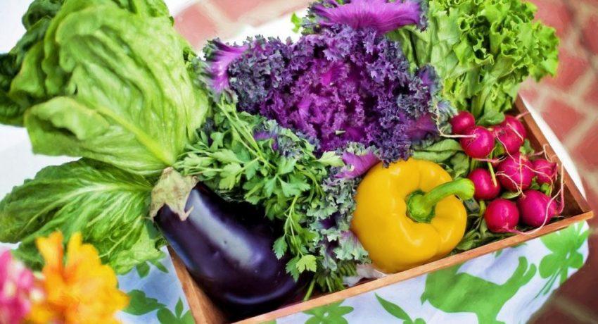 vegetables-790022_1920-1024x682