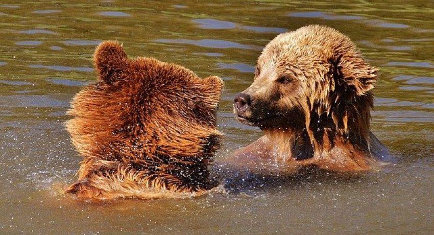 bear-1331989_640