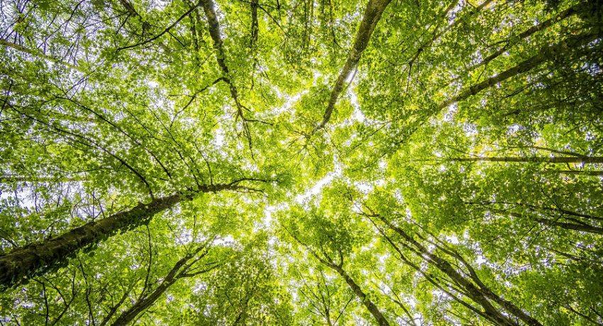 forest-trees-pexels-felix-mittermeier-957024